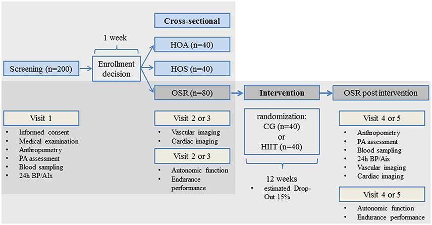 Frontiers Exercise Arterial Crosstalk Modulation And