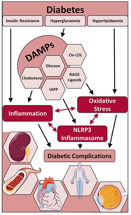 medicamento para la diabetes glibenclamida gliburida