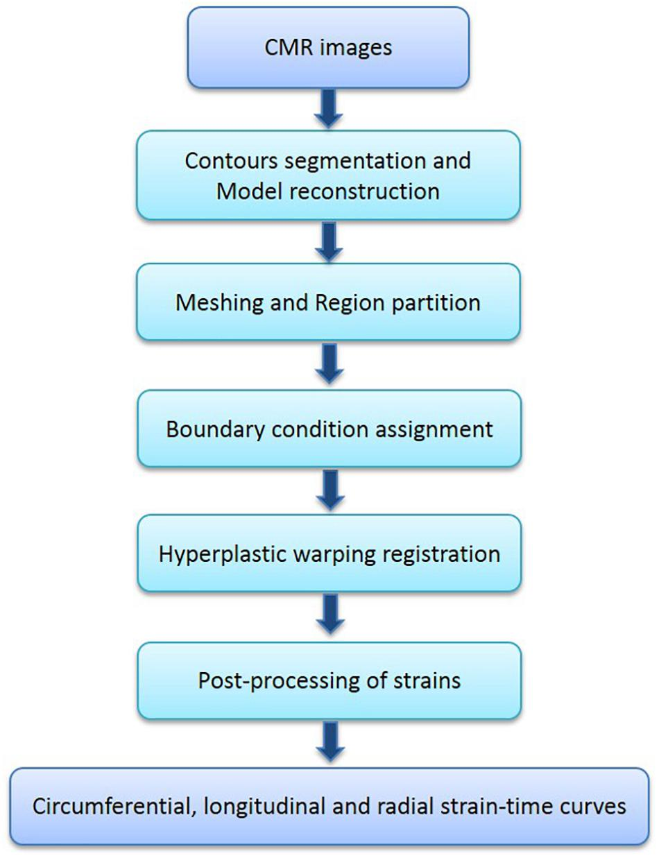 Frontiers | Quantification of Biventricular Strains in Heart