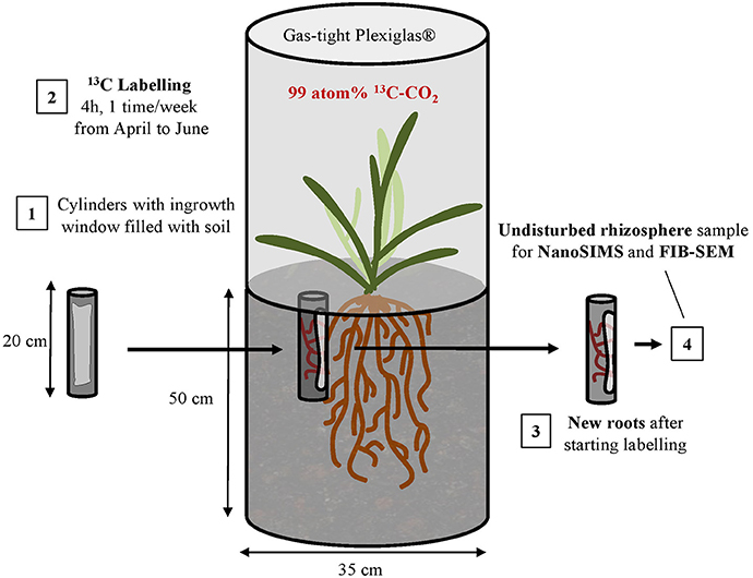 Frontiers | Linking 3D Soil Structure and Plant-Microbe-Soil