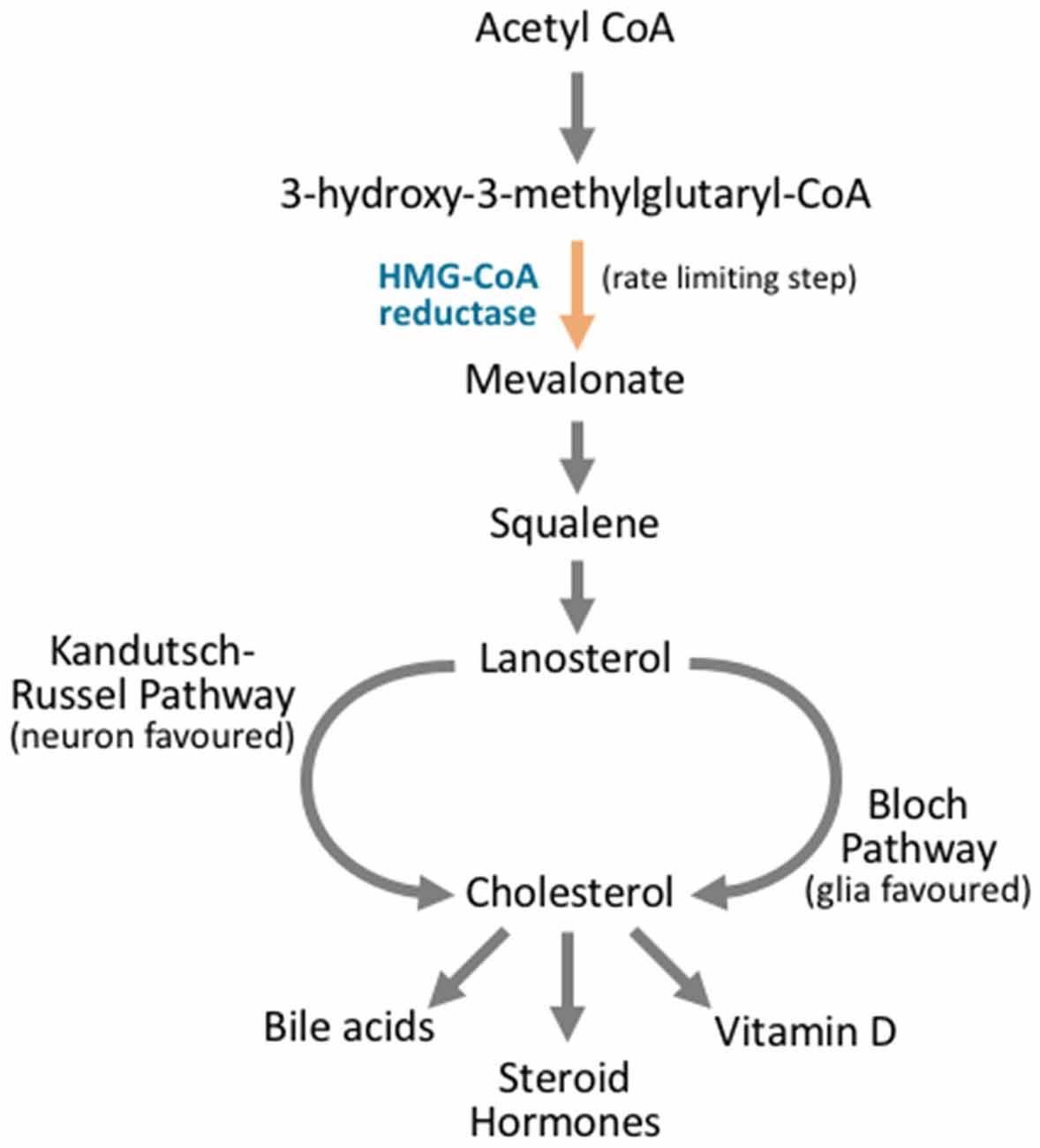 Frontiers | Neuronal Lipid Metabolism: Multiple Pathways