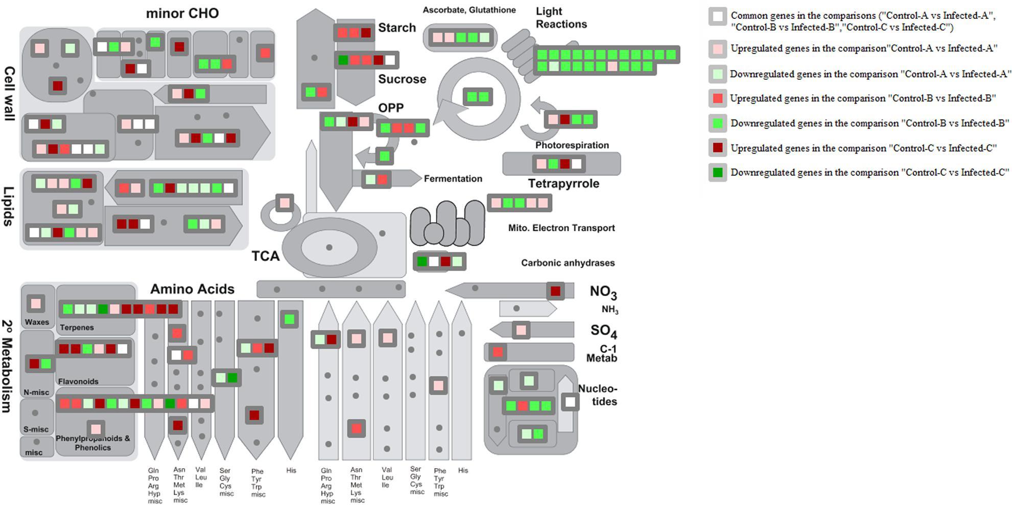 Gene regulatory networks elucidating huanglongbing disease mechanisms