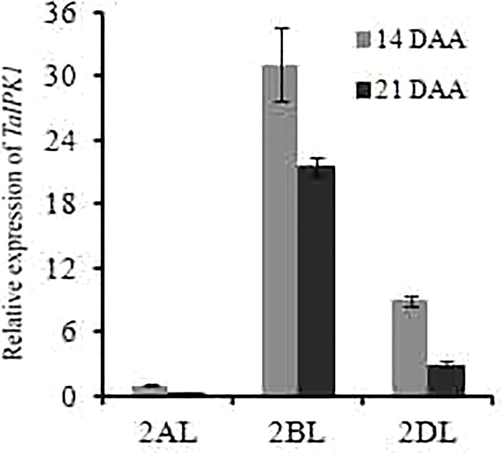 Frontiers | RNAi-Mediated Downregulation of Inositol