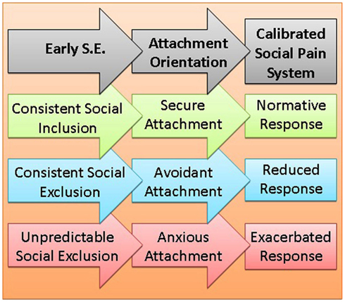 social and evolutionary psychology essay