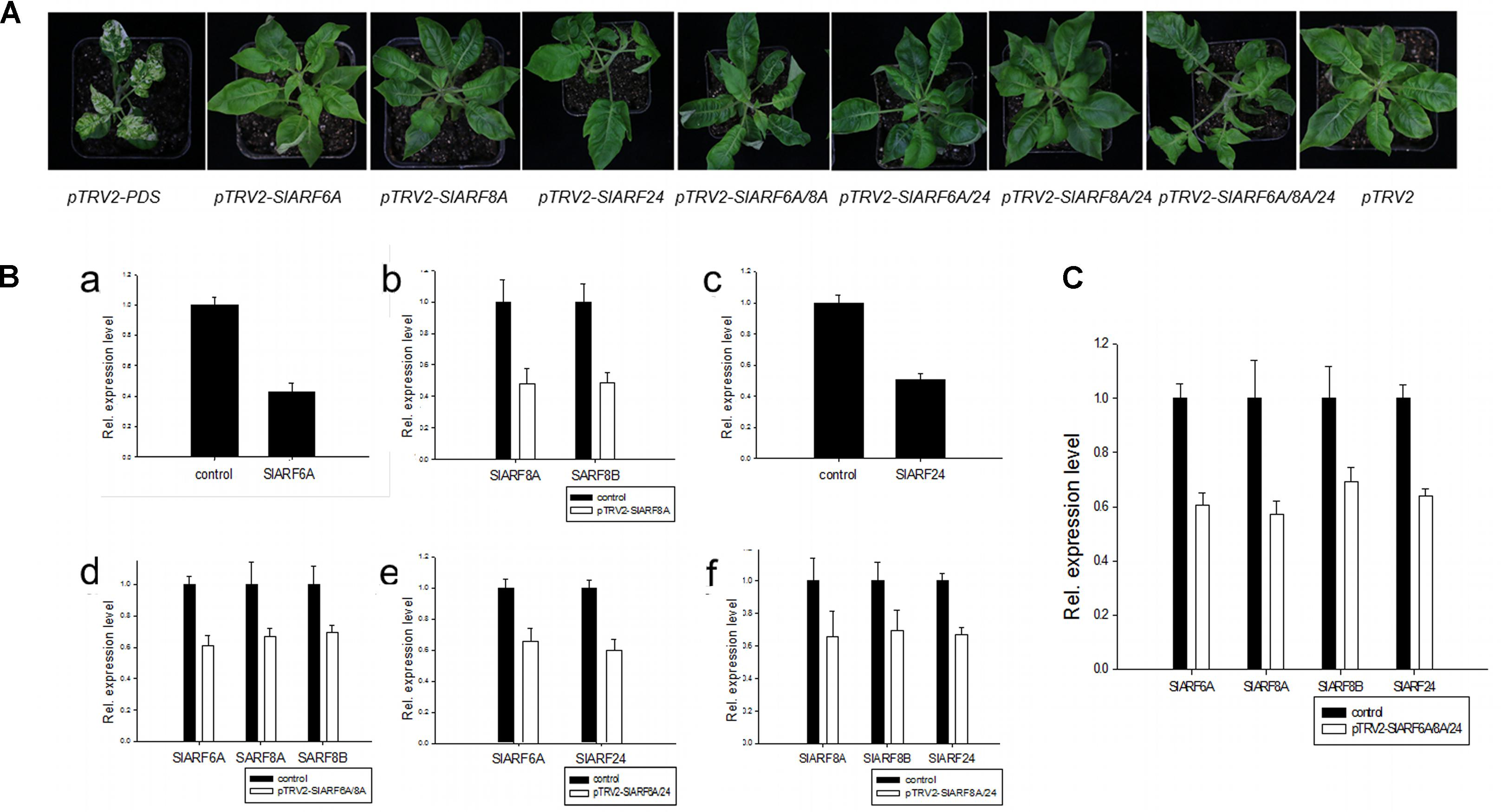 Frontiers | Functional Dissection of Auxin Response Factors