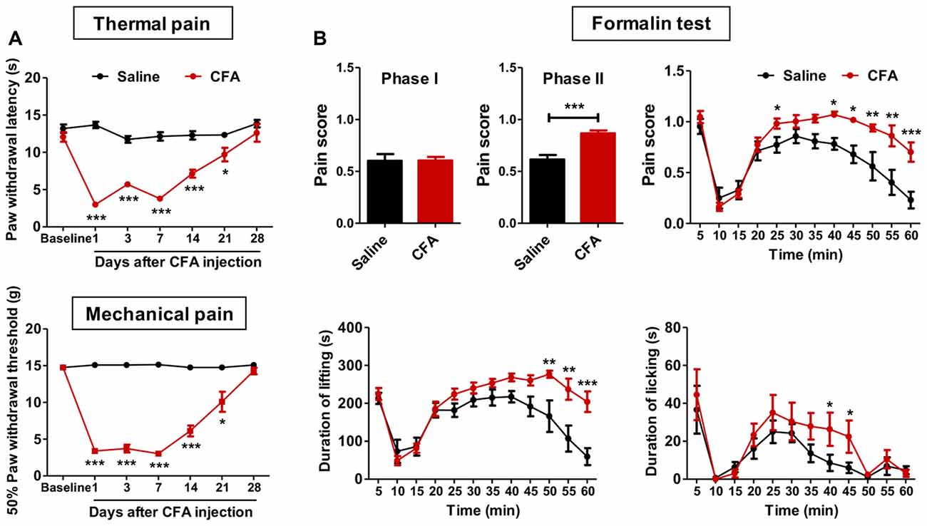 Frontiers Hypersensitivity Of Prelimbic Cortex Neurons Contributes Ac Fan Speed Control All About Circuits Forum