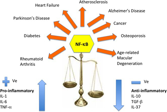 Frontiers | Age and Age-Related Diseases: Role of