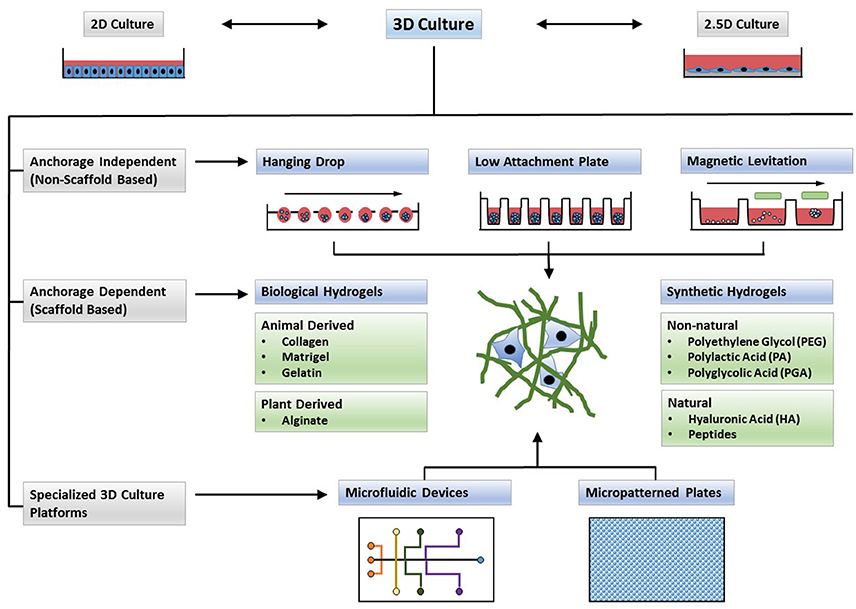 Frontiers | Three-Dimensional in Vitro Cell Culture Models