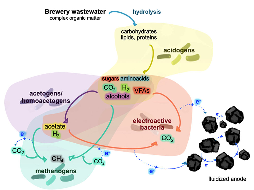 Frontiers | Geobacter Dominates the Inner Layers of a