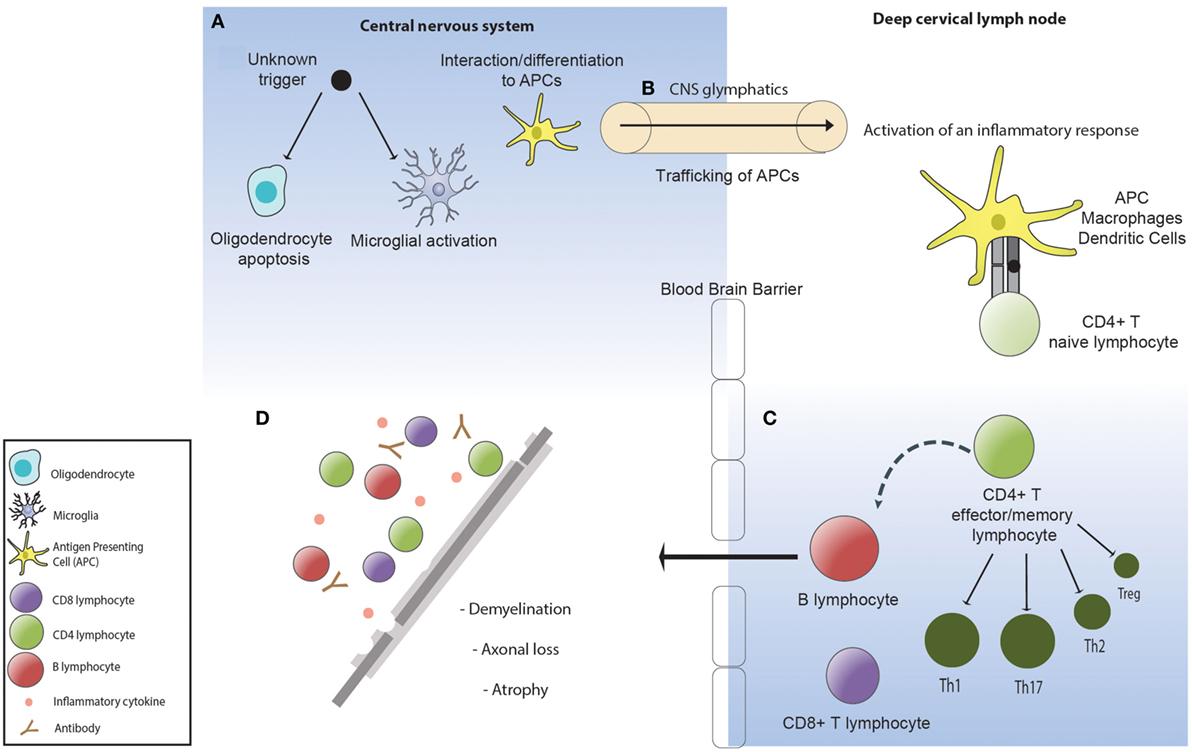 Frontiers | Regenerating Immunotolerance in Multiple