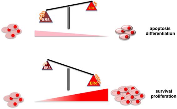 A lenmag jó a rák kockázatának csökkentésére? | addon.élet