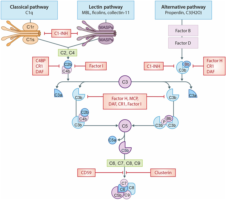 The Complement System In Dialysis: A Forgotten