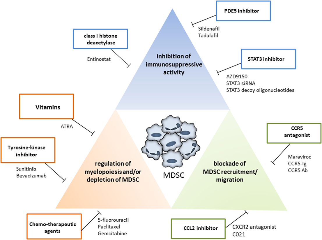 Frontiers | Targeting Myeloid-Derived Suppressor Cells to