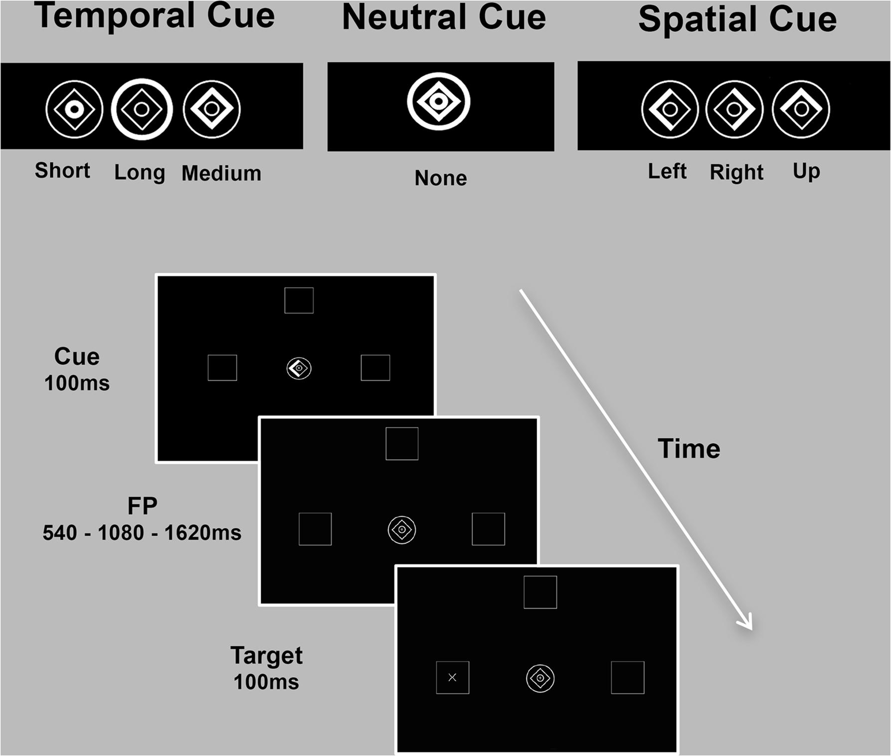 Frontiers Segregation Of Brain Structural Networks Supports Spatio And Split As Shown On A Timespace Diagram The