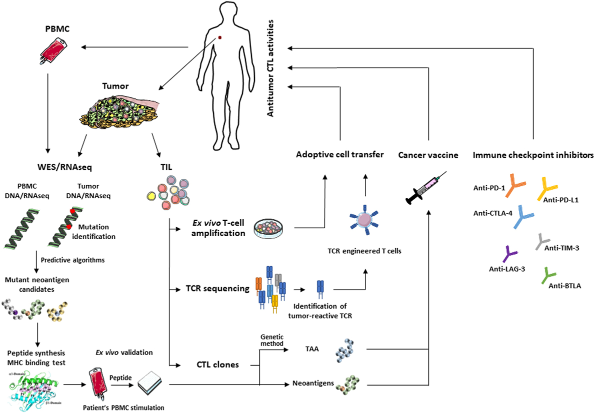 Tumor Antigens Recognized by T Cells and Antibodies (Tumor Immunology and Immunotherapy)