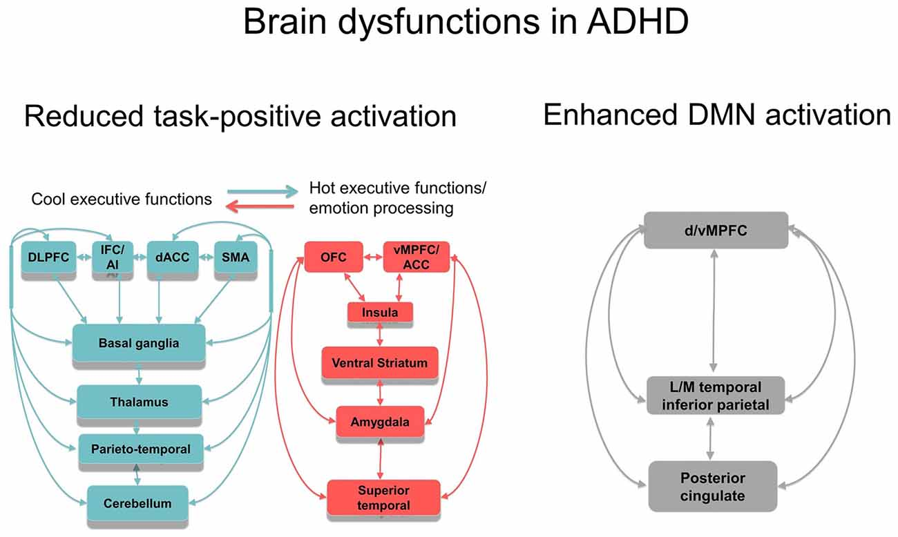 Adhd Real Brain Disorder Or Further >> Frontiers Cognitive Neuroscience Of Attention Deficit
