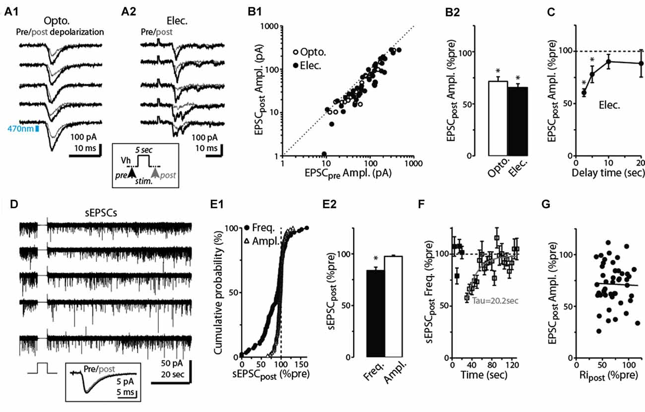 Frontiers Cannabinoid Receptors Modulate Excitation Of An Mains High And Low Voltage Cut Off Circuit Using Ic 324 Explained