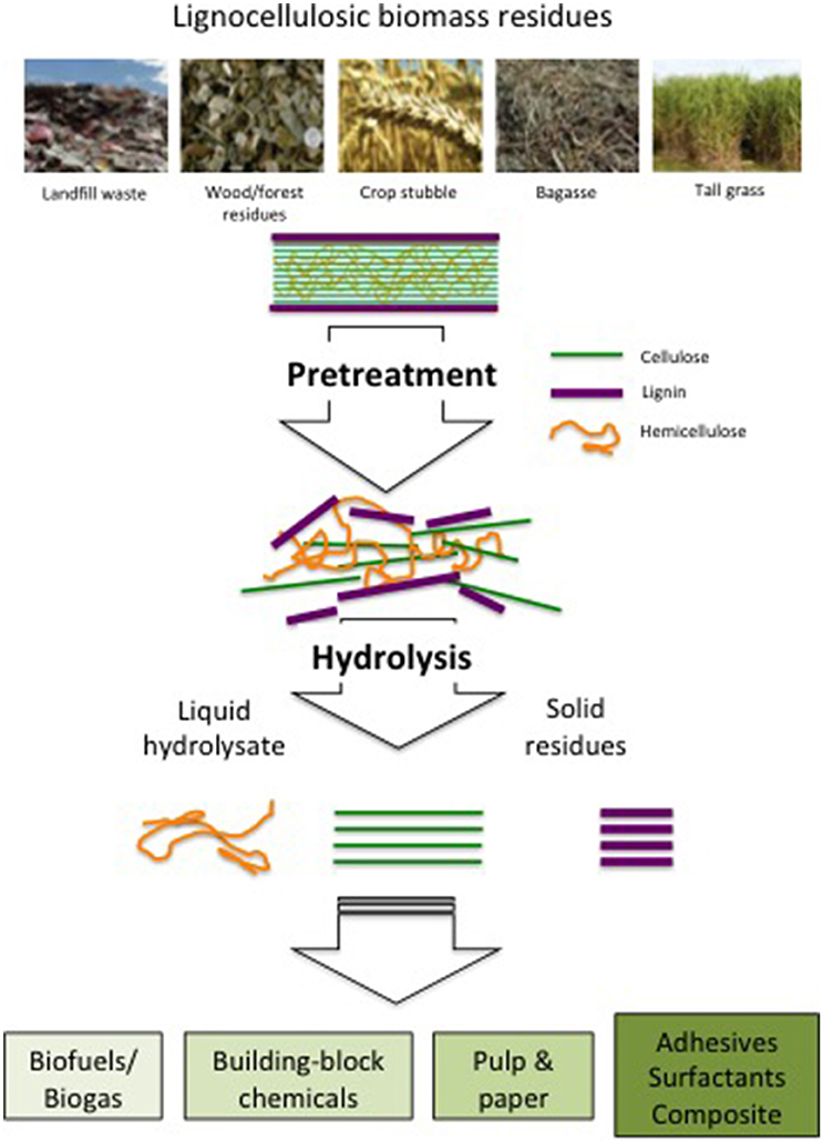 Frontiers | Lignocellulosic Biomass Transformations via