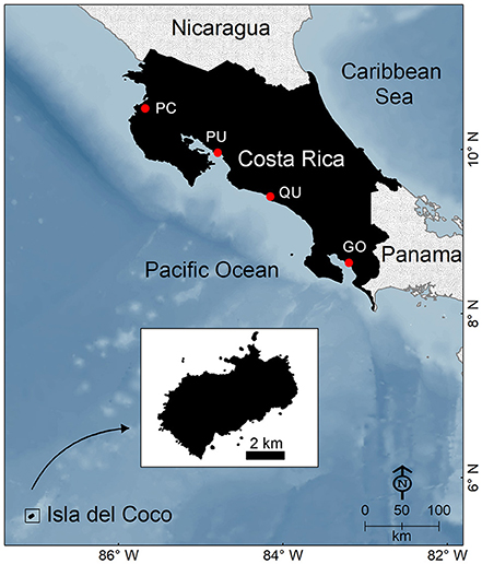 Chondrichthyan Diversity, Conservation Status, and Management Challenges in Costa Rica.