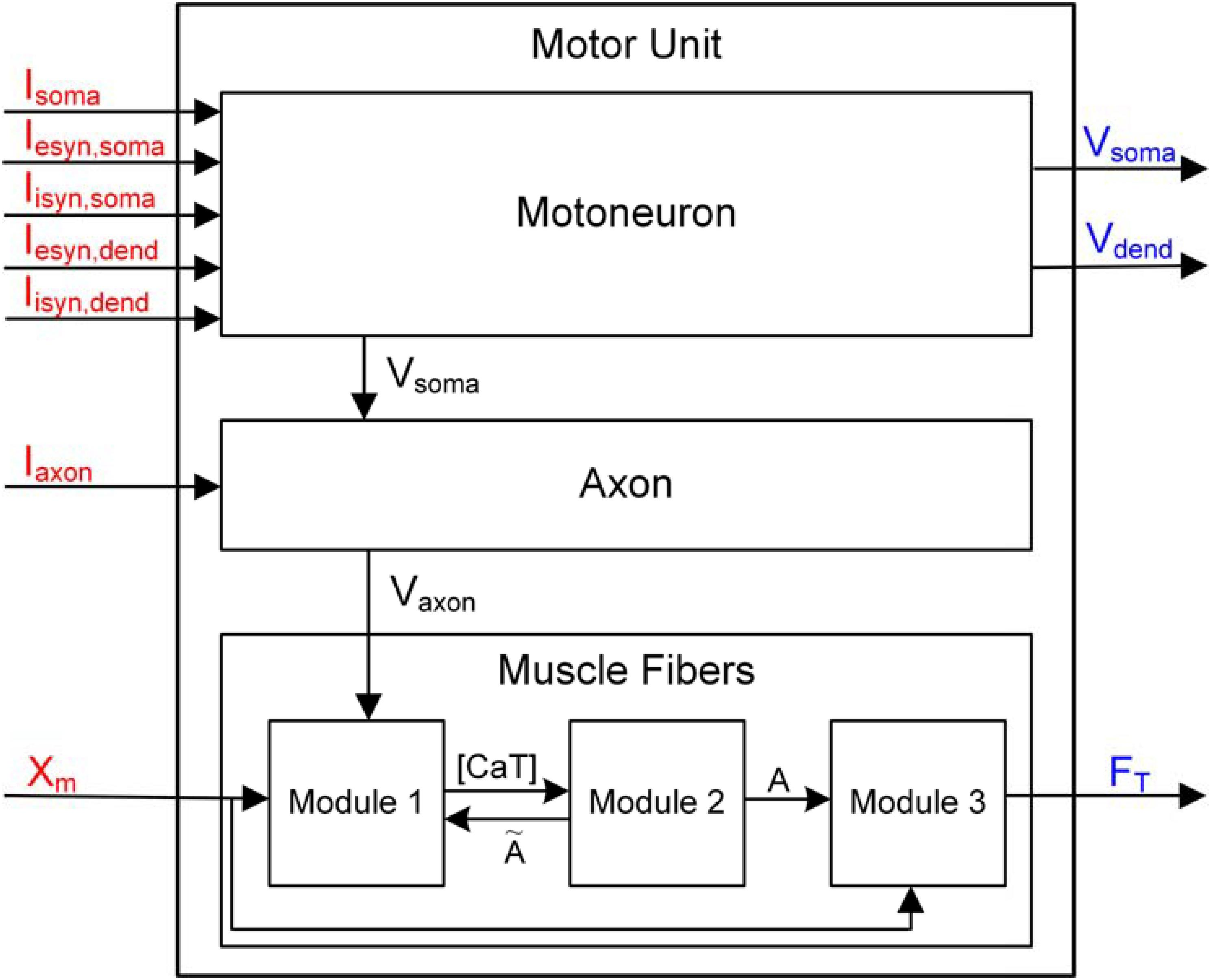 Frontiers | PyMUS: Python-Based Simulation Software for Virtual ...