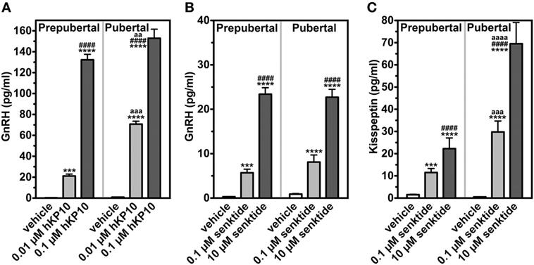 Kisspeptin Gnrh Neurons: Role Of Kisspeptin And Neurokinin B In Puberty