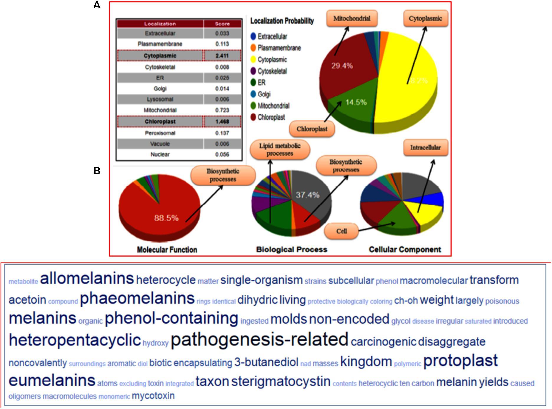 Frontiers   In silico Prediction, Characterization, Molecular