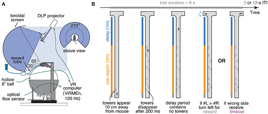 Frontiers | An Accumulation-of-Evidence Task Using Visual Pulses for