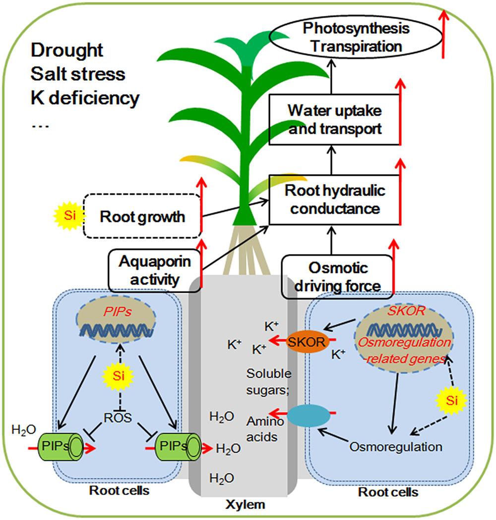 transpiration stress solution