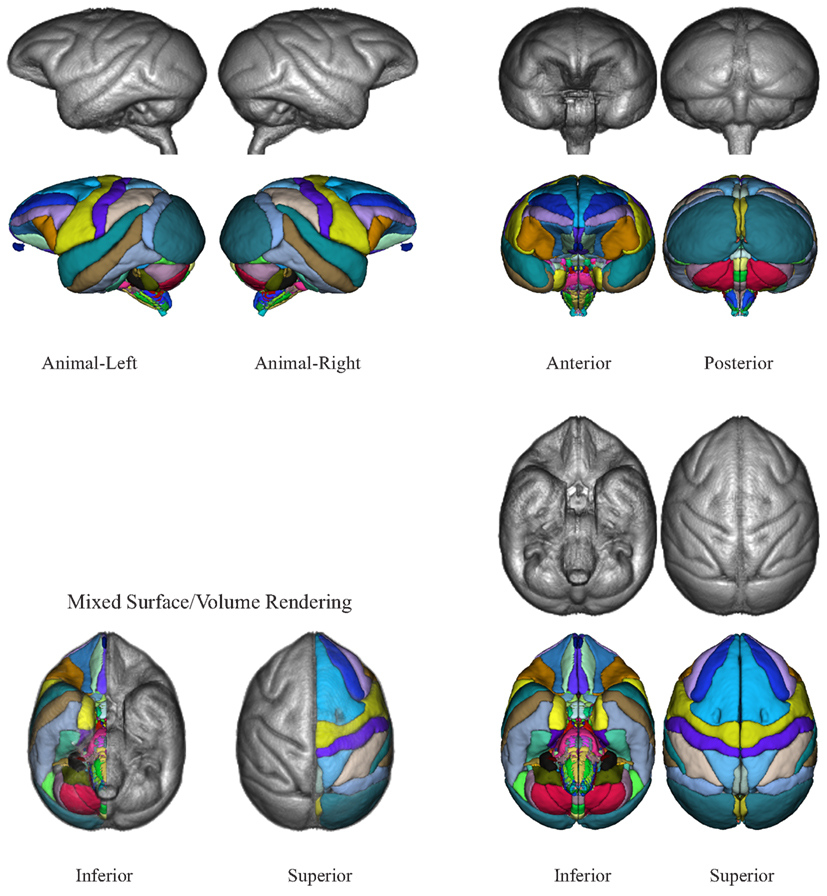 Frontiers | The INIA19 Template and NeuroMaps Atlas for Primate ...