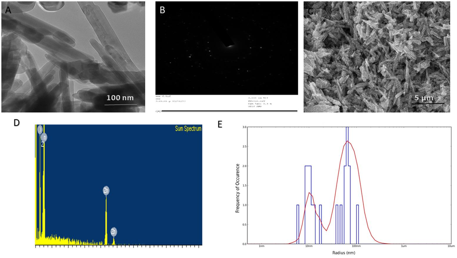 Frontiers | Synergistic Effect of Diallyl Sulfide With Zinc Oxide ...