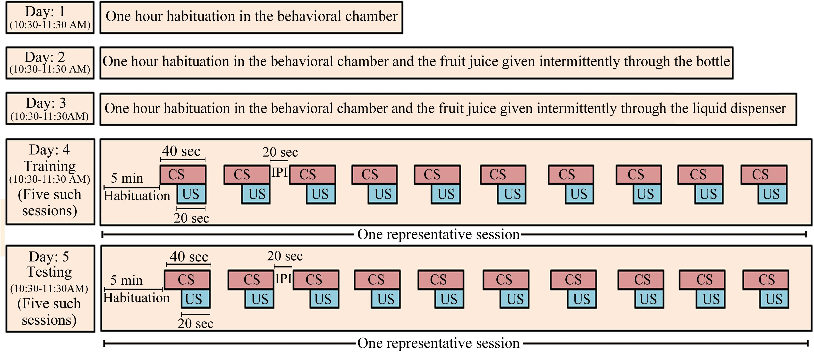 Frontiers | Training on an Appetitive (Delay)-Conditioning