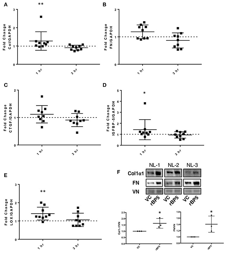 Frontiers | IGFBP-5 Promotes Fibrosis via Increasing Its Own