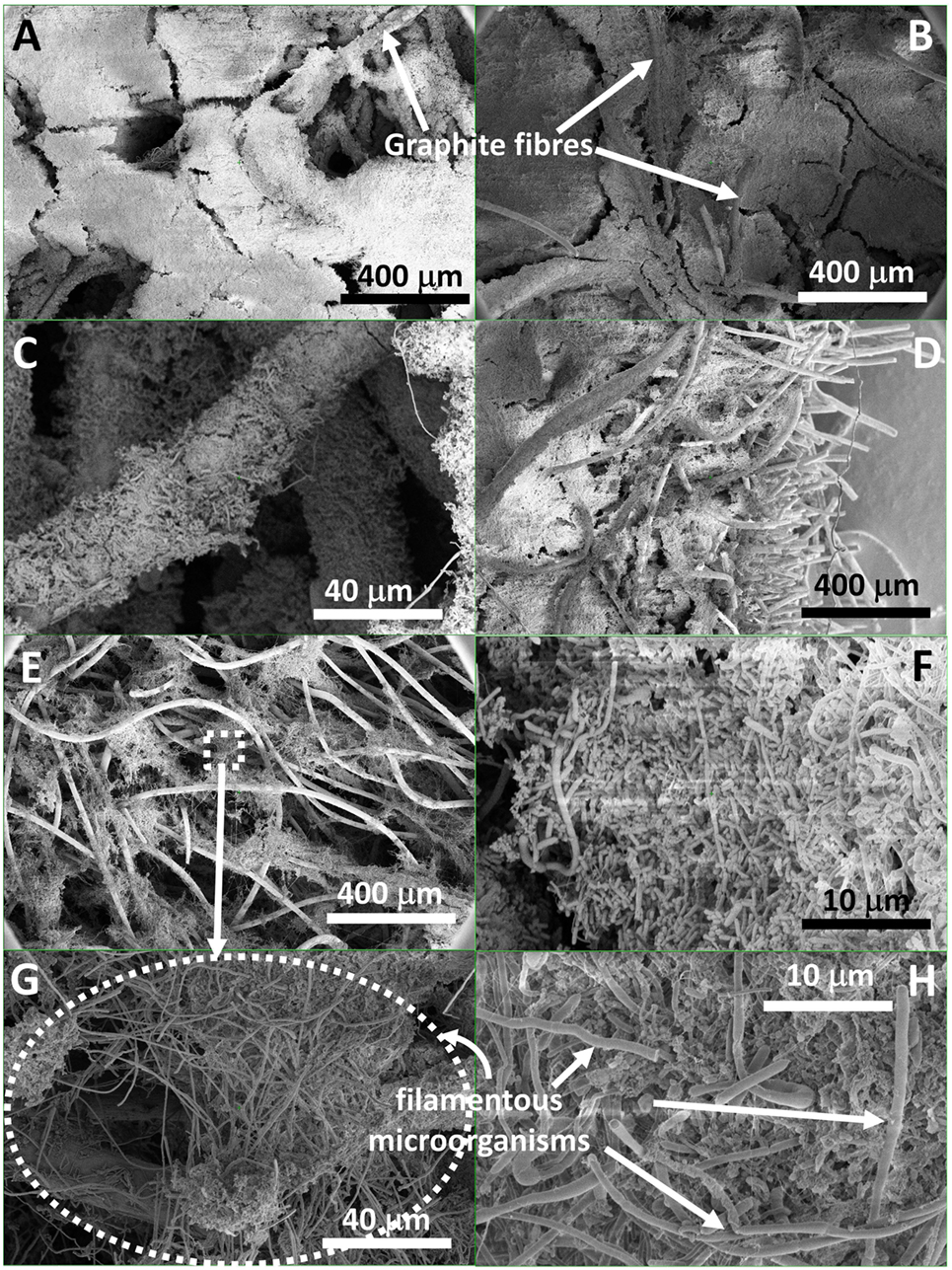 Frontiers | Critical Biofilm Growth throughout Unmodified