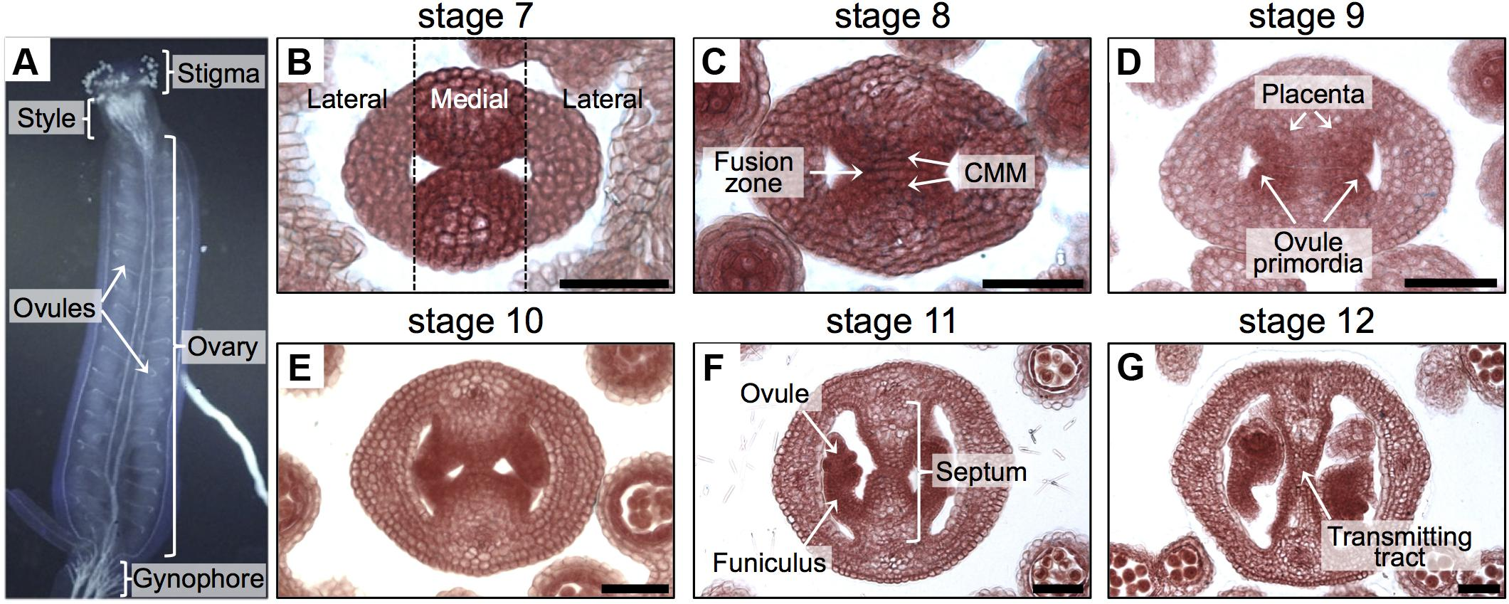 Frontiers | Exploring Cell Wall Composition and