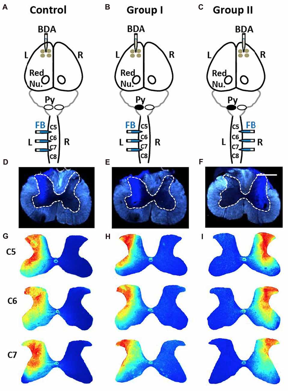 Frontiers Plasticity In One Hemisphere Control From Two Schematic Symbols Electrical Motor Submited Images