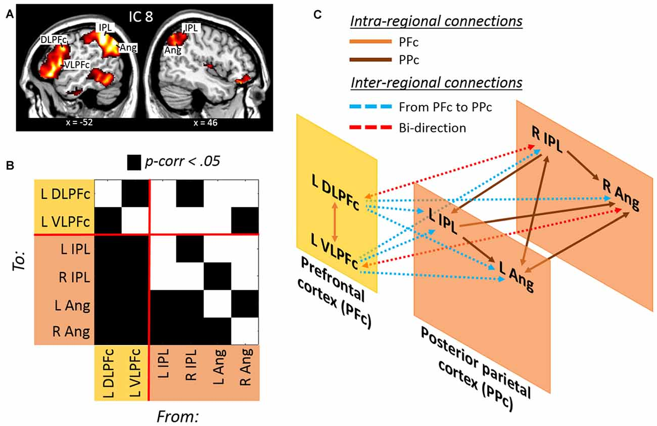 Frontiers | large-scale brain networks supporting divided.