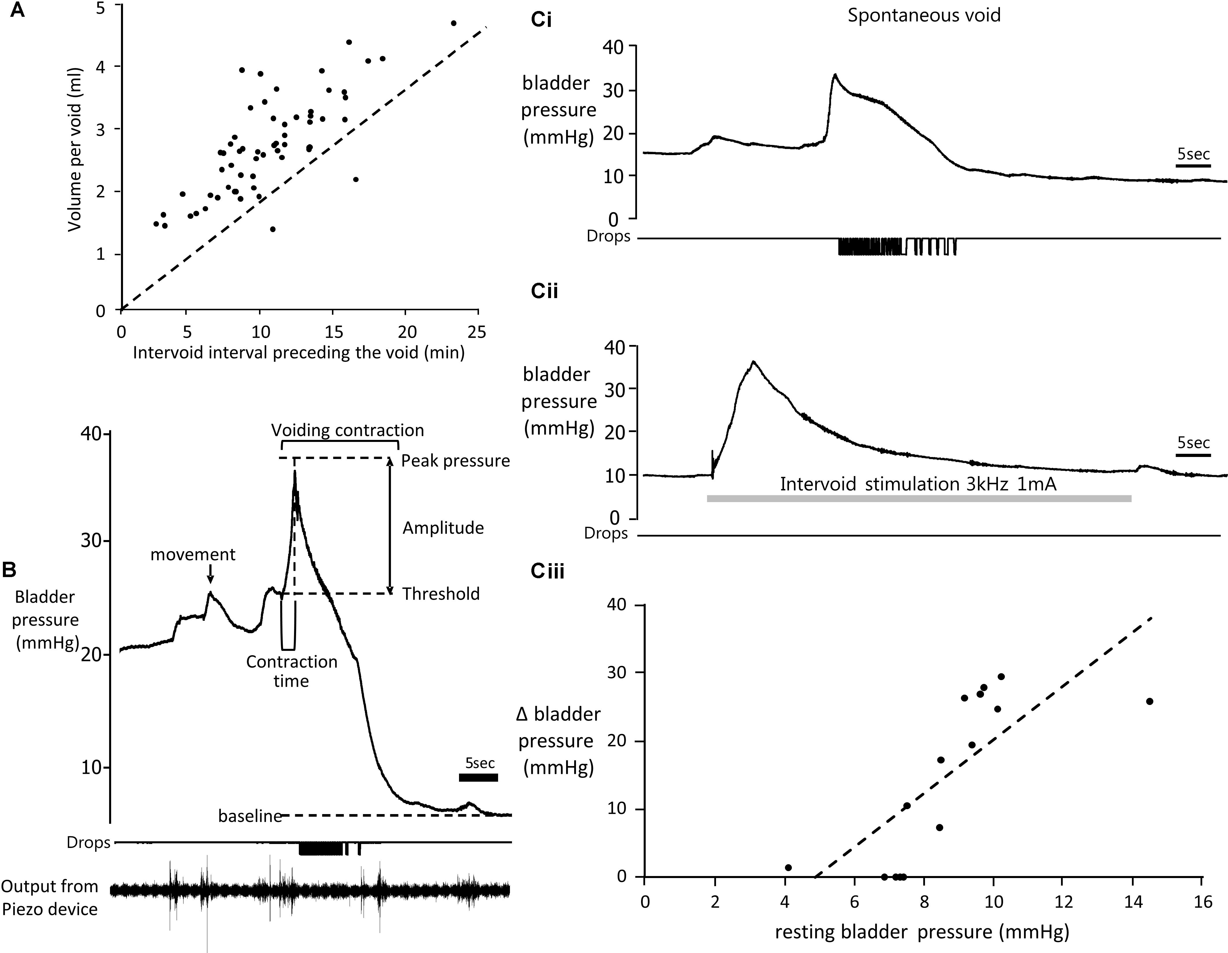 Frontiers Suppression Of Urinary Voiding By Conditional High Hunter Dsp Wiring Diagram