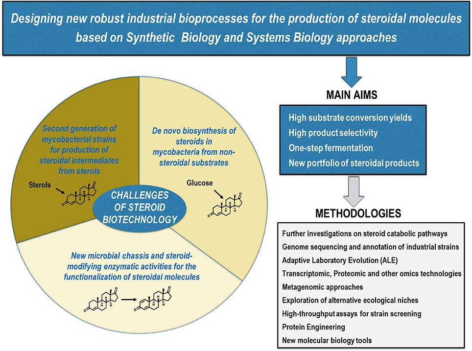 Frontiers | New Insights on Steroid Biotechnology