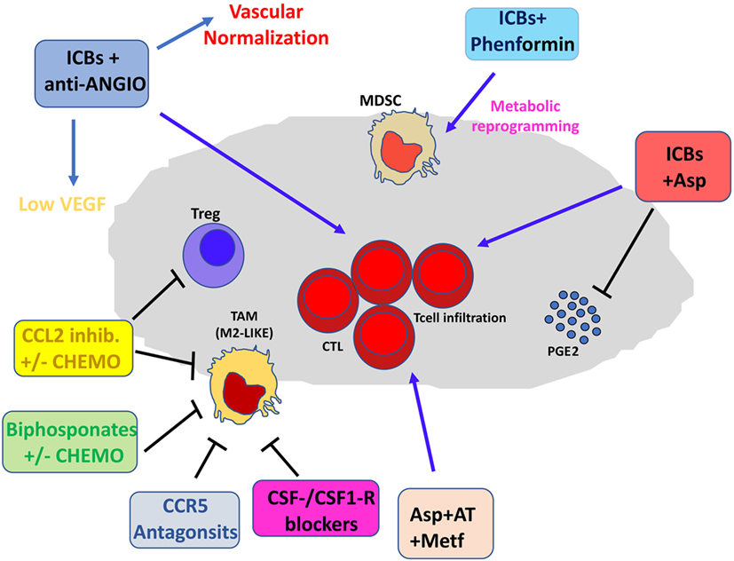 Frontiers | Contribution to Tumor Angiogenesis From Innate