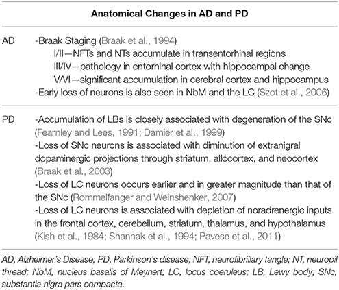 Frontiers | Noradrenergic Dysfunction in Alzheimer's and