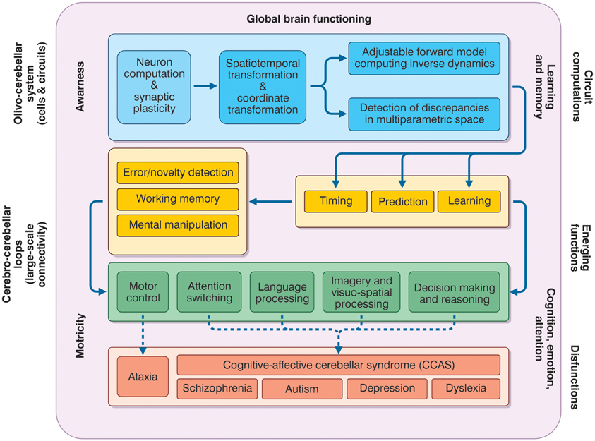 frontiers | seeking a unified framework for cerebellar function, Sphenoid