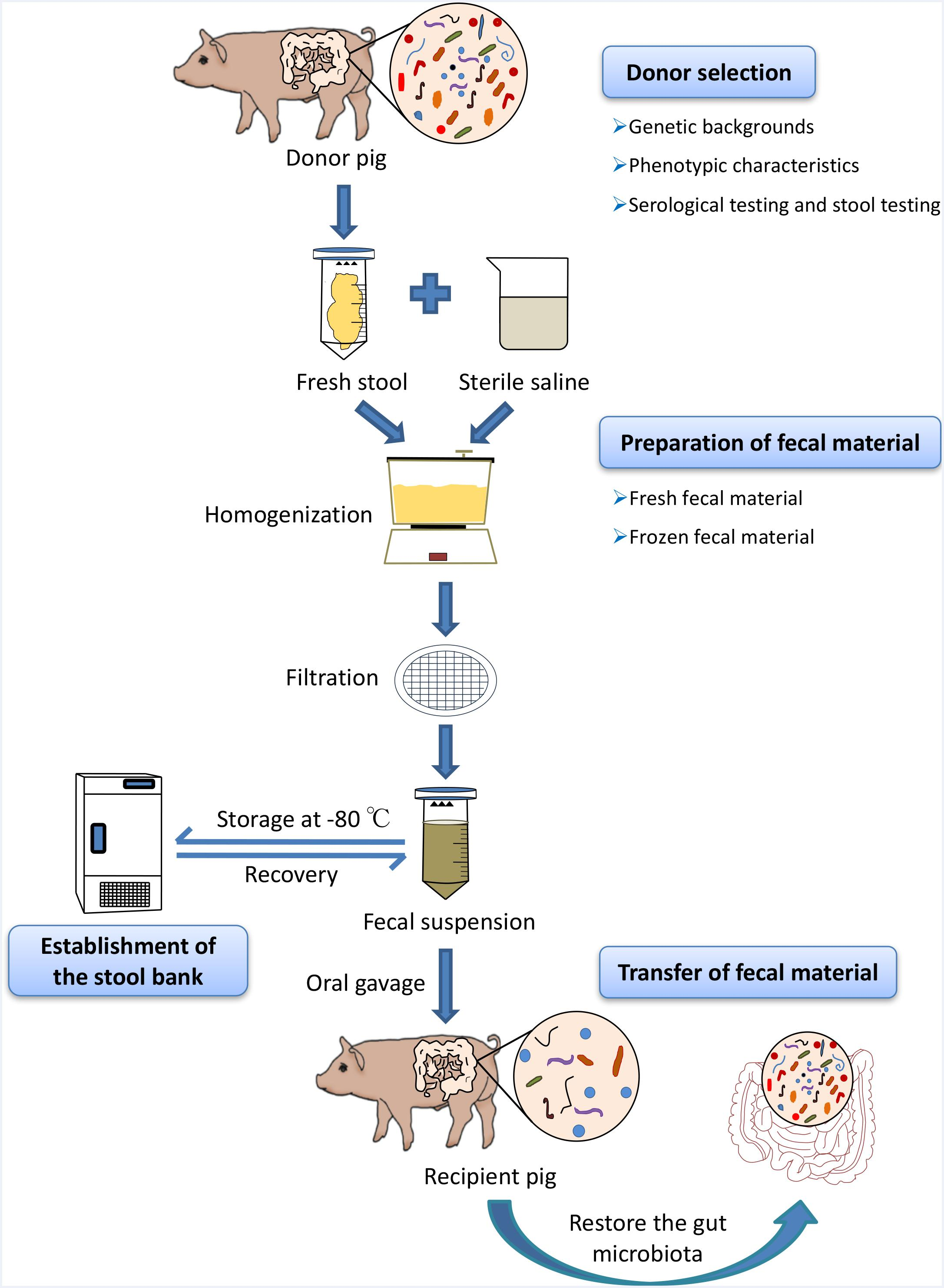 Frontiers Standardized Preparation For Fecal Microbiota