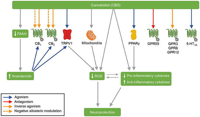 Frontiers | Cannabidiol as a Promising Strategy to Treat and Prevent