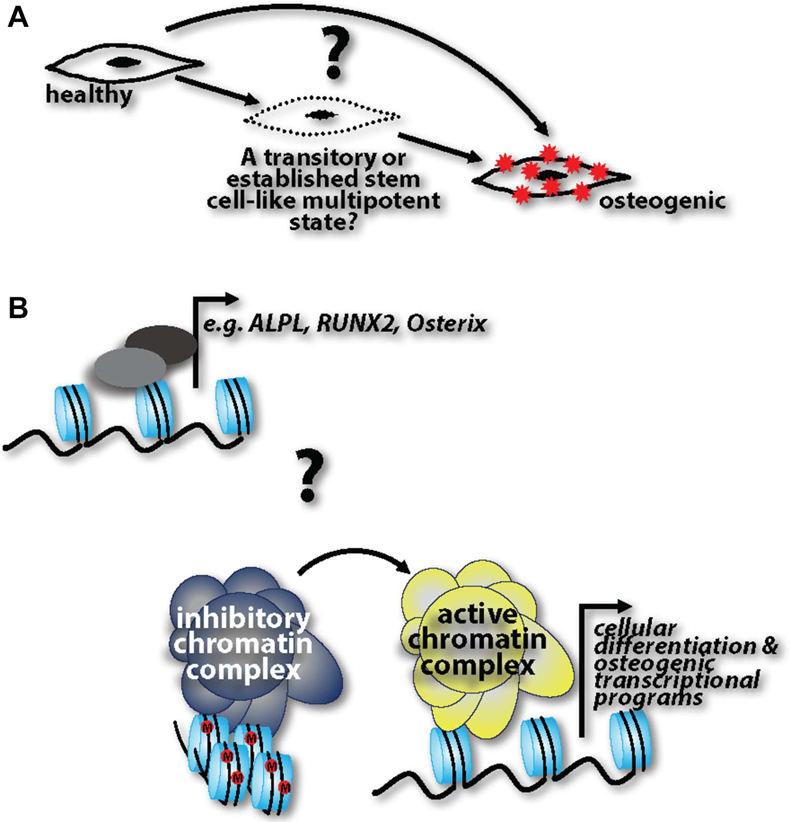 Frontiers Cell Phenotype Transitions In Cardiovascular Trojan T 1275 Wiring Diagram