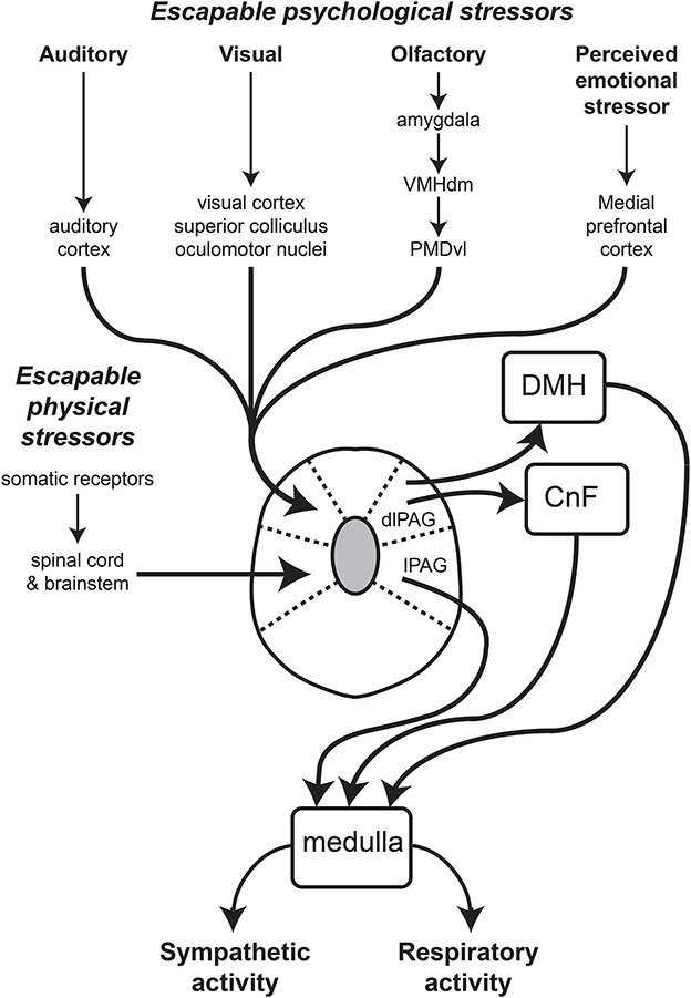 Frontiers Emotion And The Cardiovascular System