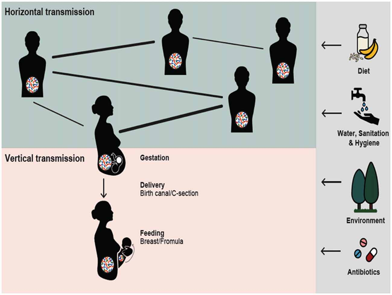 Frontiers Reciprocal Interactions Between Gut Microbiota And Host