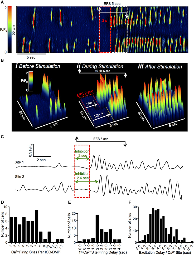 Frontiers | Inhibitory Neural Regulation of the Ca2+