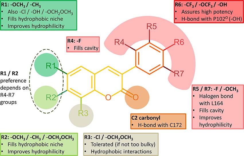 biguanide structure activity relationship of selegiline