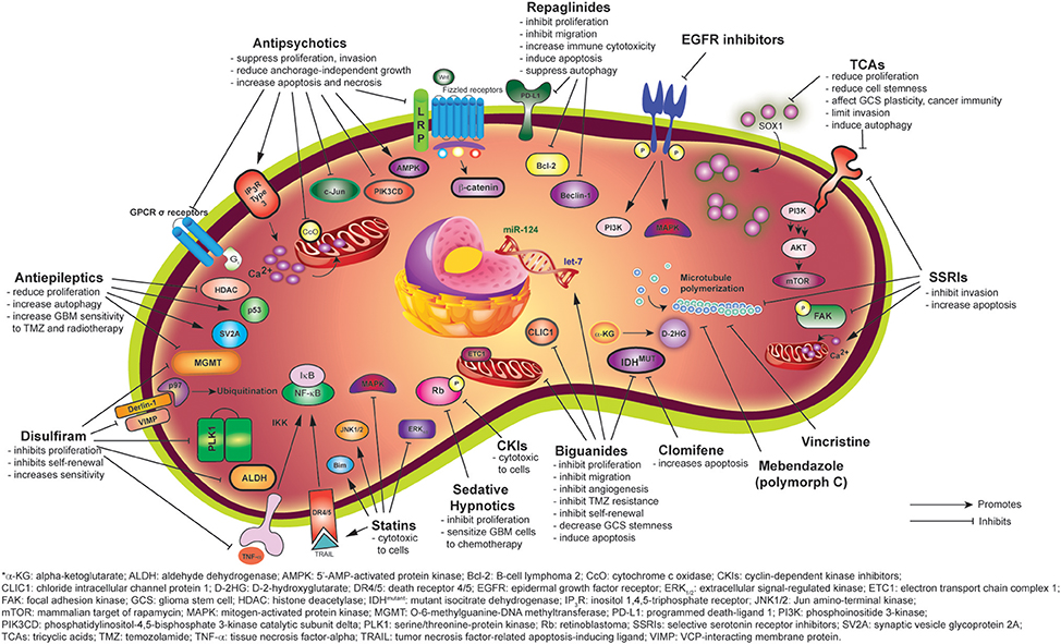 Frontiers | Drug Repositioning in Glioblastoma: A Pathway