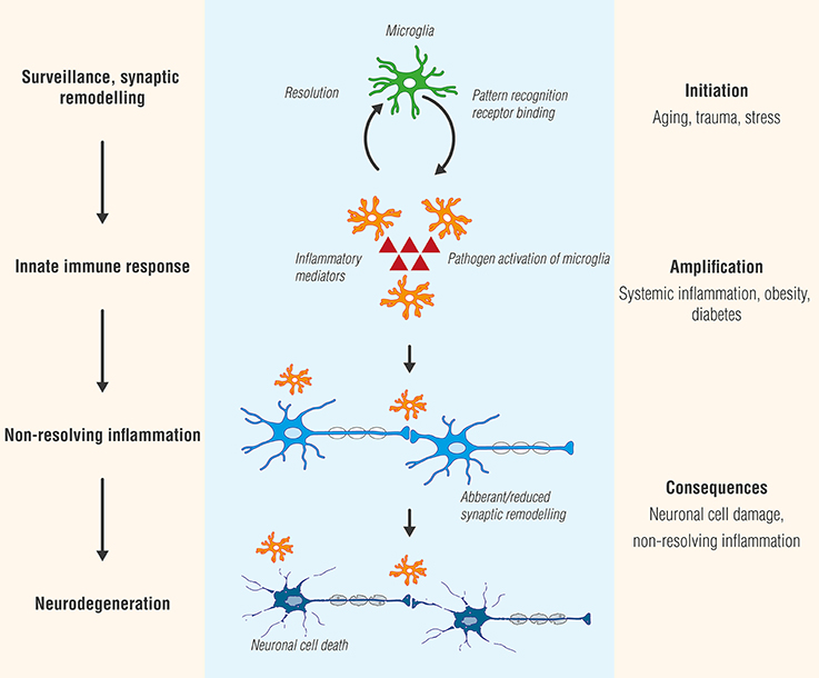 How Severe Maternal Inflammation Can >> Frontiers An Inflammation Centric View Of Neurological Disease